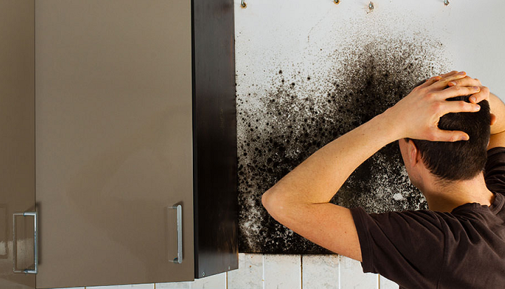 Shower Room Mold Should Never Go Unchecked